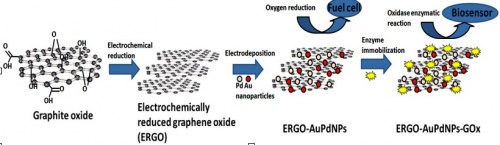 Electrochemical Synthesis Of Reduced Graphene Sheet Aupd