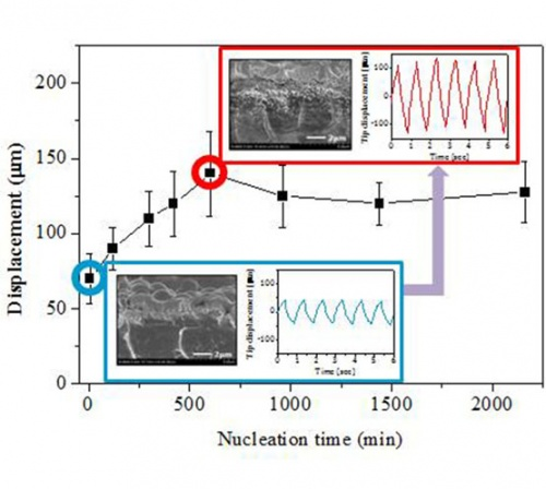 Effect of nucleation time on bending response of ionic polymer-metal composite actuators