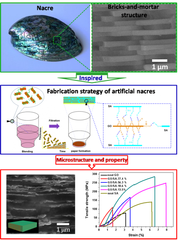 Binary Synergy Strengthening Toughening  Bio-Inspired Nacre-like Graphene Oxide Sodium Alginate Composite Paper
