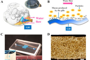 Clam-inspired nanoparticle immobilization method using adhesive tape as microchip substrate