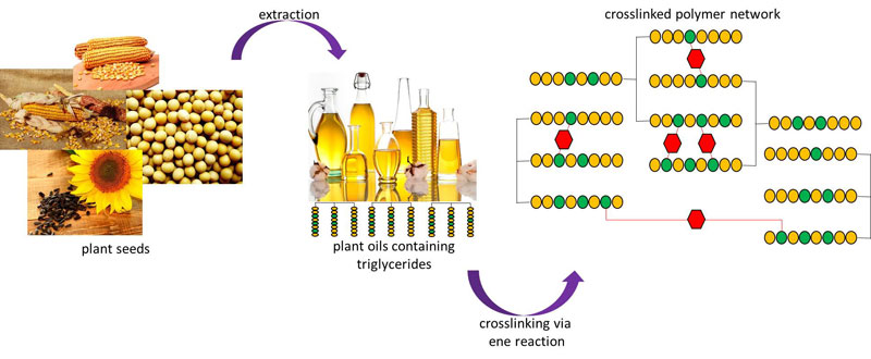 Curing of Plant Oils with Bismaleimides via Ene Reaction-Advances in Engineering