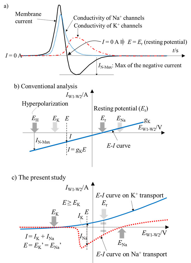 directional propagation of action potential using a mimicking system