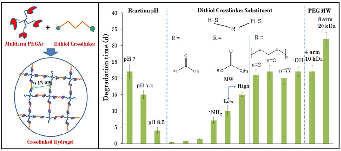 Control of gelation, degradation and physical properties of polyethylene glycol hydrogels through the chemical and physical identity of the crosslinker- Advances in Engineering