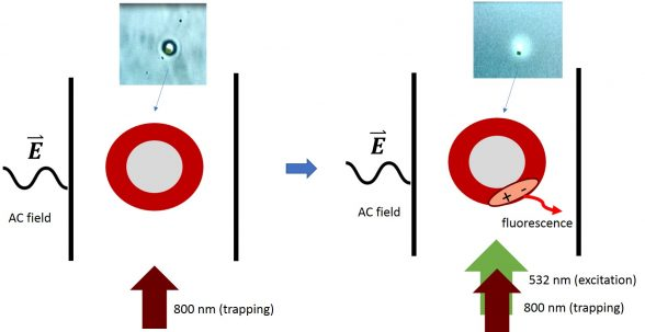 Simultaneous fluorescence and surface charge measurements on organic semiconductor-coated silica microspheres in (non)polar liquids. Advances in Engineering