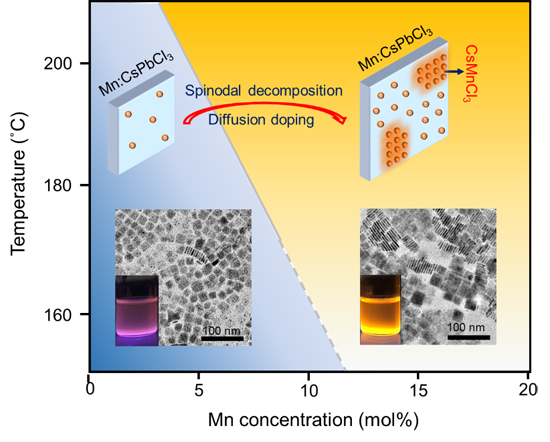 Beyond Doping: Complete Dopant Substitution in Two-Dimensional perovskite Nanoplatelets - Advances in Engineering