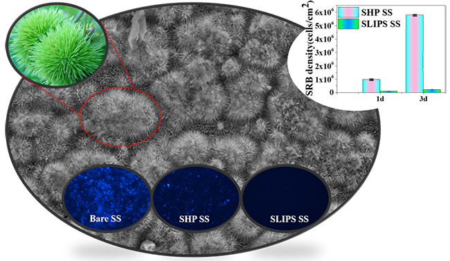 Bioinspired superhydrophobic and oil-infused surface: Which is the better choice to prevent marine biofouling? - Advances in Engineering