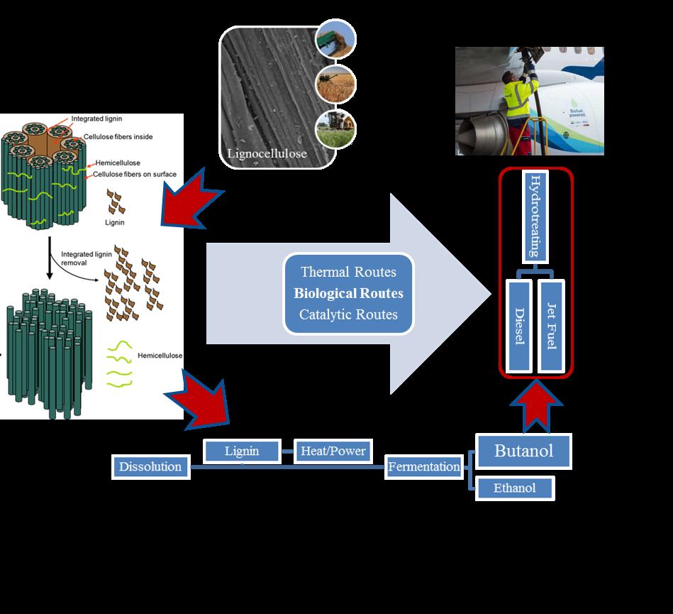 Novel-fusants-of-2-3-clostridia-for-enhanced-green-production-of-biobutanol-Advances-in-Engineering