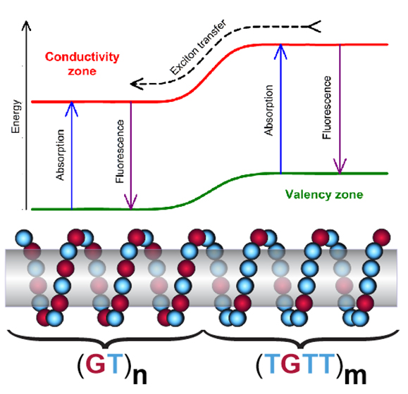 Controlled Patterning of Carbon Nanotube Energy Levels by Covalent DNA Functionalization - Advances in Engineering