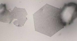 Solvent-mediated morphology engineering: pseudomorph of fullerene C60 microcrystals - Advances in Engineering
