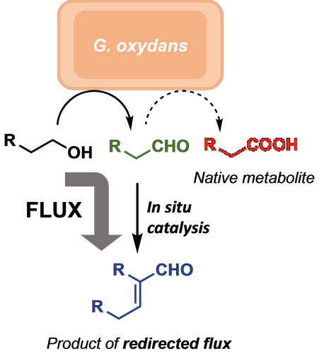 Merger of Whole Cell Biocatalysis with Organocatalysis Upgrades Alcohol Feedstocks in a Mild, Aqueous, One-Pot Process - Advances in Engineering