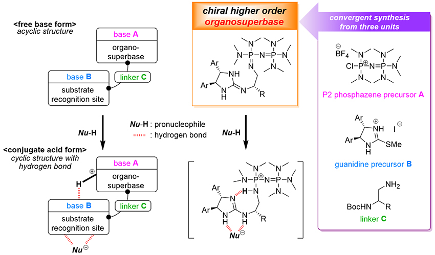 Chiral Higher Order Organosuperbase For Catalytic Enantioselective Transformation - Advances in Engineering