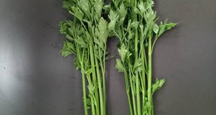 Exploration of Super-chilling Technology of Fresh-cut Celery - Advances in Engineering
