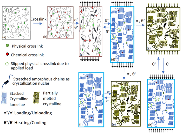Constitutive Modeling of Polymers with Reversible Actuation - Advances in Engineering