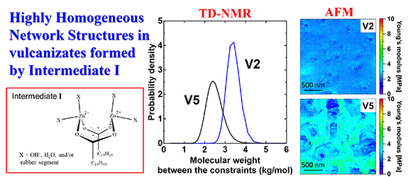 Study on Homogeneity in Sulfur Cross-Linked Network Structures of Isoprene Rubber by TD-NMR and AFM - Zinc Stearate System - Advances in Engineering