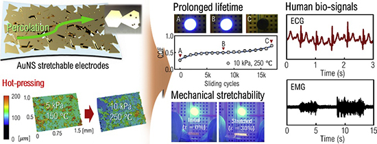 Mechanical durability enhancement of gold-nanosheet stretchable electrodes for wearable human bio-signal detection - Advances in Engineering