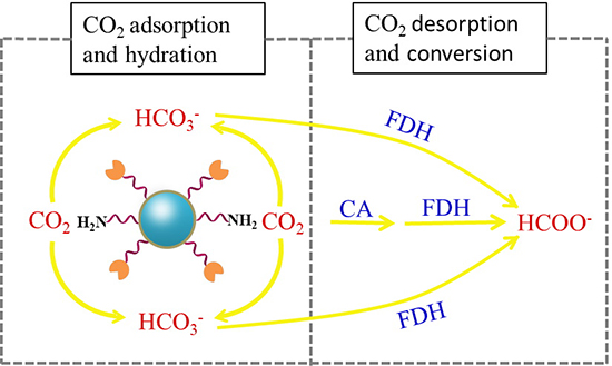 Dopamine/Polyethylenimine-Modified Silica for Enzyme Immobilization and Strengthening of Enzymatic CO2 Conversion - Advances in Engineering