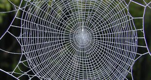 Can the spider hear the position of the prey? - Advances in Engineering